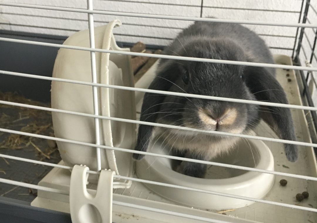 Watson het konijn